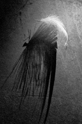 feather di valen85