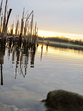 Photo: Cattails in a lake nearing sunset at Eastwood Park in Dayton, Ohio.