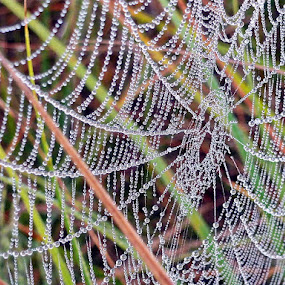 Spider dew ! by Atti Maguran - Nature Up Close Webs