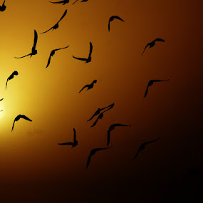 by TANVEER Ali - Animals Birds