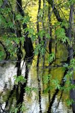 Photo: Dusky glow on the river