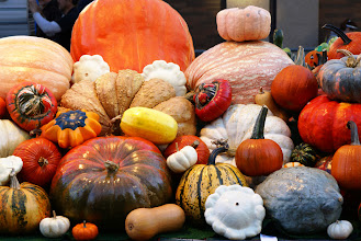 Photo: A variety of pumpkins