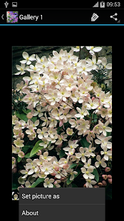 Clematis Ideas - náhled