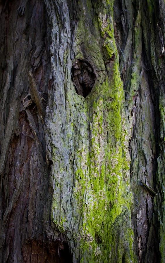 Tree by Janete Ribeiro - Nature Up Close Trees & Bushes ( detail, park, tree, green, city park )