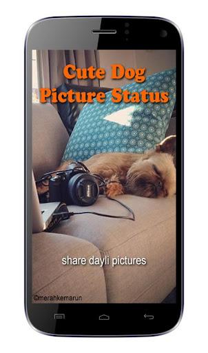 Cute Dog Picture Status
