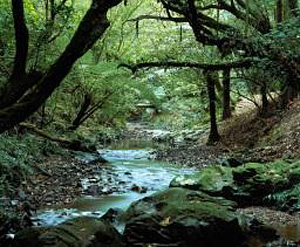 Image result for Otari-Wilton's Bush Native Botanic Garden & Forest Reserve