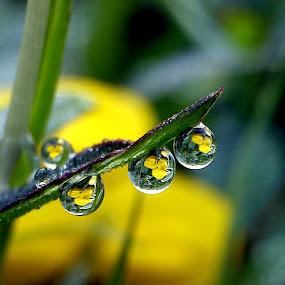 Yellow Flower by Adnan Hidayat Prihastomo - Instagram & Mobile Other ( macro, dew )
