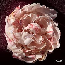 Photo: Цветоделие- цветы из ткани работы Татьяны Опритовой - цветы своими руками