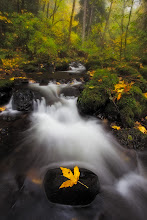Photo: Just another shot from a rainy / cloudy day in the gorge. Believe it or not, that leaf was actually on the rock when I walked up to the scene. It inspired me to sit here for about 20 minutes even though there is a nice big waterfall to shoot about 100 yards away.  This is also my contribution to #FallFriday and #FourSeasonsFriday curated by +Karin Nelson and +Stephonie Ogden.  #PlusPhotoExtract #FlowingWaterFriday