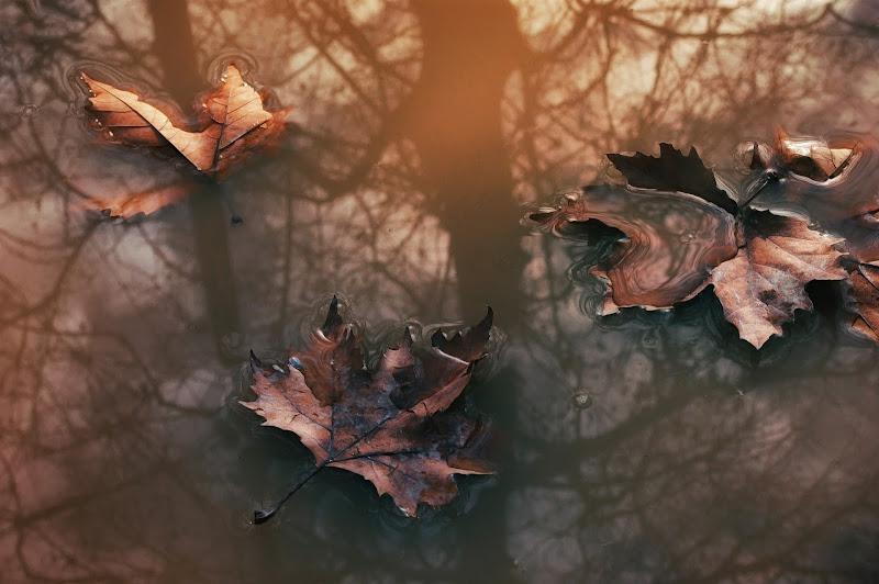 Le foglie morte  di Erato