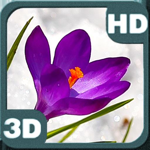 PiedLove.com Personalizations avatar image
