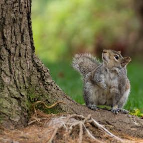 by Teresa Hoyt - Animals Other Mammals (  )