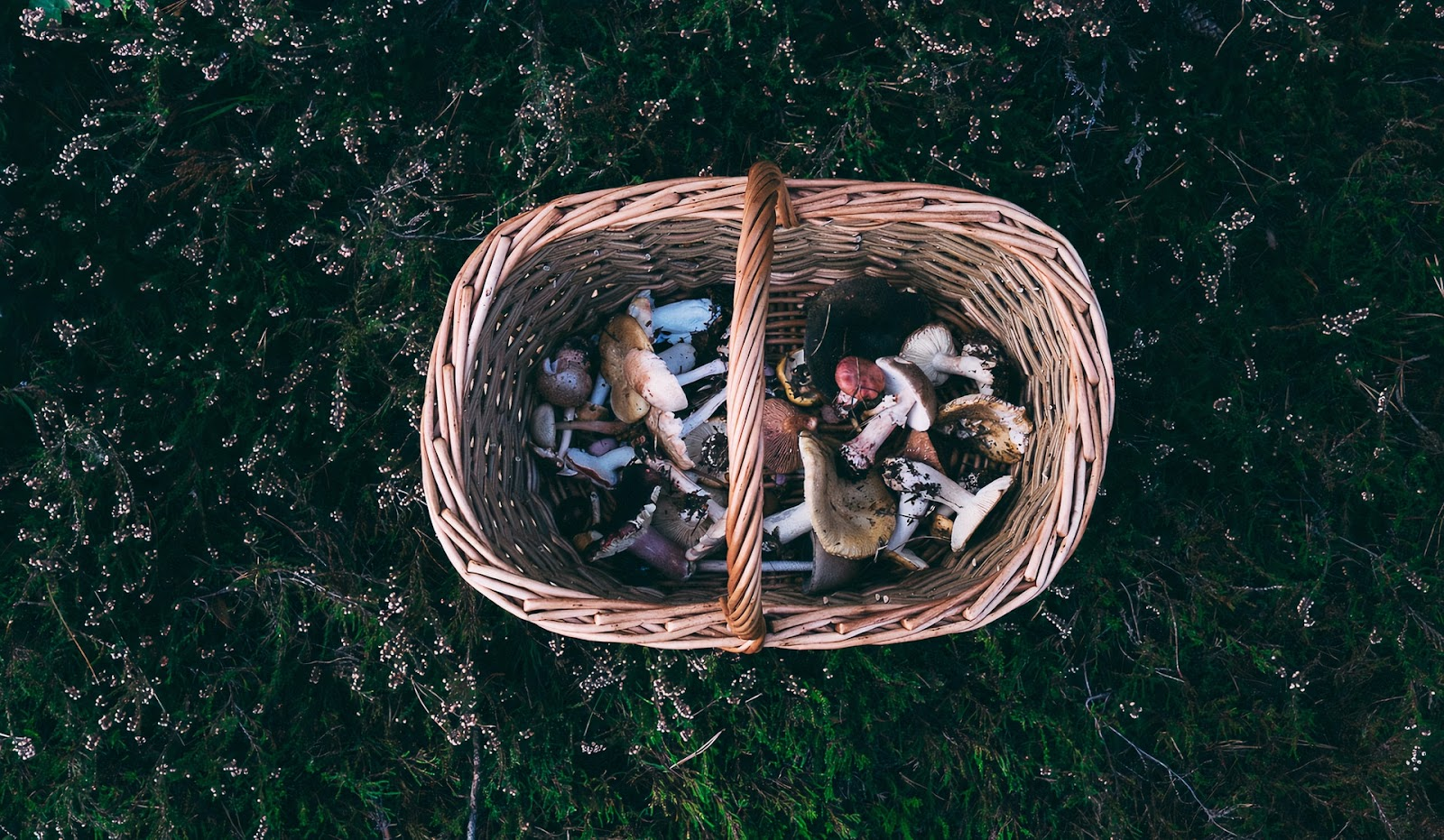 Best Tips on How to Start Foraging and its Benefits 3