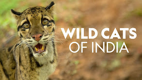 Wild Cats of India thumbnail