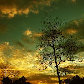 Dusk by Prince Frankenstein - Instagram & Mobile Android ( sky, sunset, dusk, evening, golden,  )
