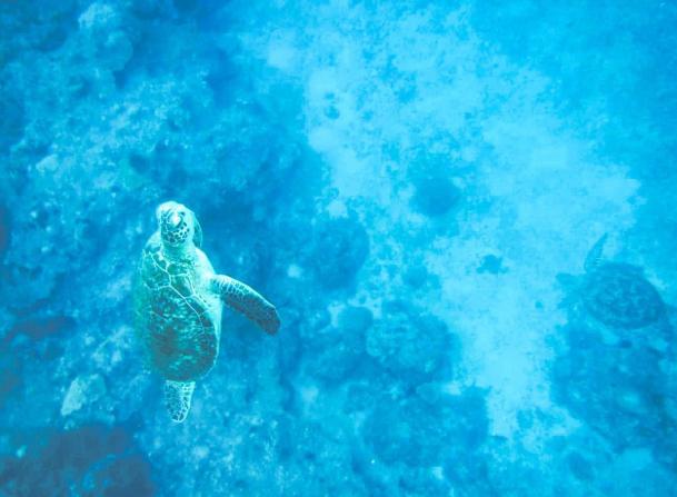 我與海龜有約|體驗浮潛
