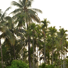 by Yogesh Gundye - Nature Up Close Trees & Bushes