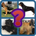 Guess the dog breed Icon