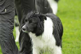 Photo: Kaunis, uitettu koira kuva: Miira Ikonen