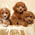 Dog Wallpapers Collections icon