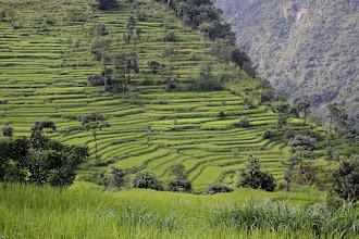 Photo: Rizières près de Lamjung