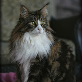 by Mark Luftig - Animals - Cats Portraits (  )