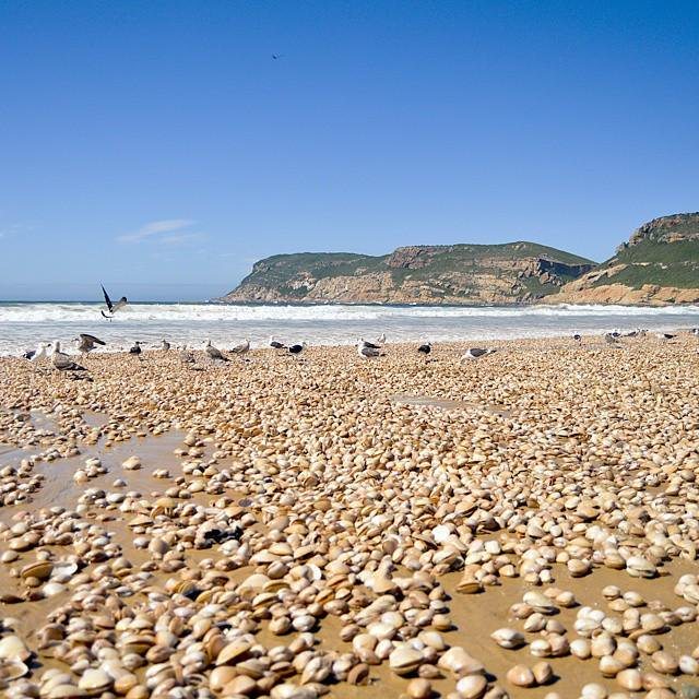 Around 11.5 million clams washed up on Robberg Beach in Plettenberg Bay in the Western Cape.