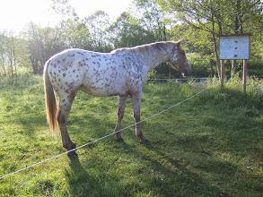 Photo: Le cheval est reveillé aussi.