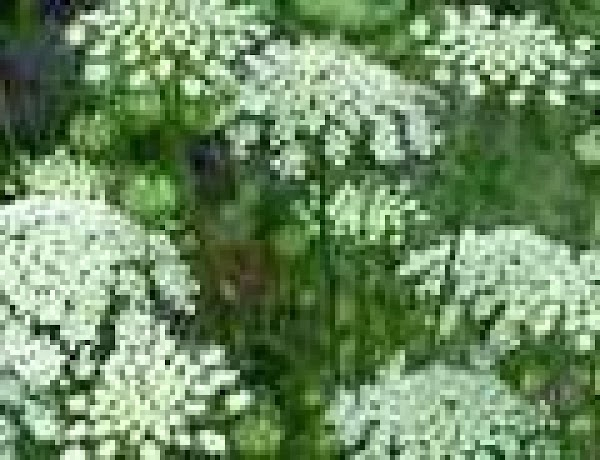 Pick flowers in an area tha has NOT been sprayed and is NOT too...