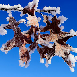 Frost on the leaves. by Denton Thaves - Nature Up Close Leaves & Grasses ( freezing temperatures, winter cold, clear skies, icicles, frost, leaves )
