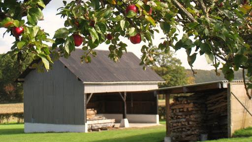 pommes-dautomne-belles-a-croquer-a-la-ferme-du-tertre