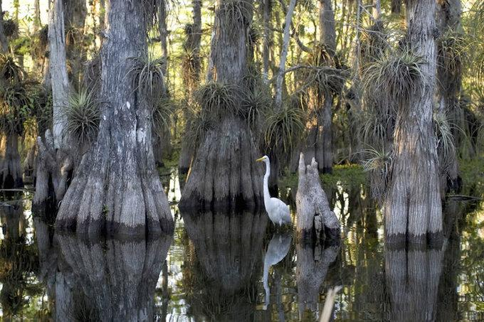 Vườn quốc gia nơi cá sấu ngự trị ở Mỹ