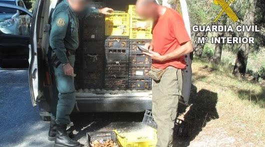 Intervenidos 50 kilos de hongos y seis denuncias por incumplir la normativa