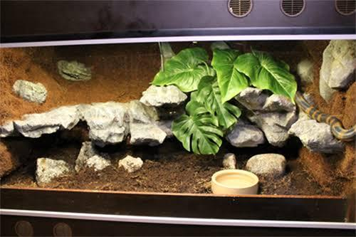 Image result for ringed python enclosure