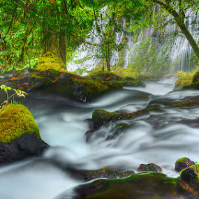 Panther Creek Poetry by Mary Lane Anderson - Landscapes Waterscapes ( water, gifford pinchot, washington, panther creek, waterfall, landscape )