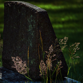 Tomb grass  by Todd Reynolds - City,  Street & Park  Cemeteries