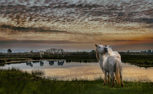 On the lake by Milan Malovrh - Animals Horses (  )