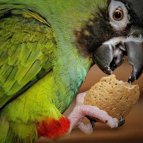 Almond Joy by Pat Abbott - Animals Birds ( animals, parrots, pets, conures, birds )