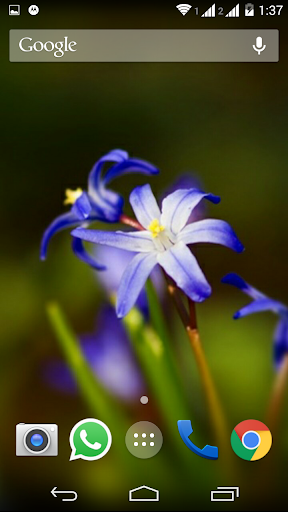 Beautiful Flower Hd Wallpapers Apk Download Apkpure Co