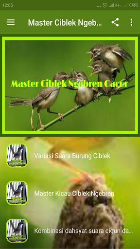 Master Ciblek Ngebren Gacor Offline Download Apk Free For Android Apktume Com