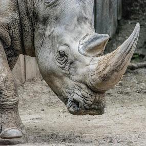 by Antonio Winston - Novices Only Wildlife