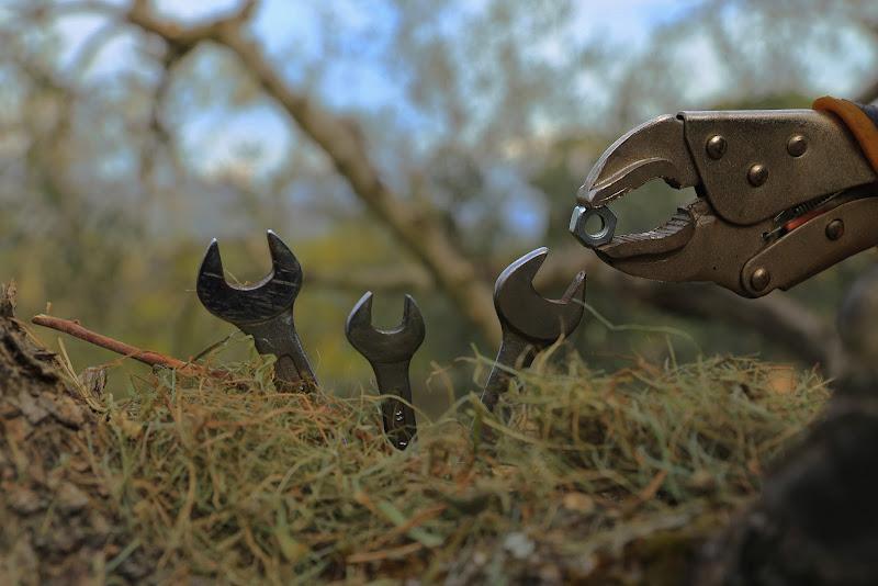 uccelli di ferro di gattoparty5