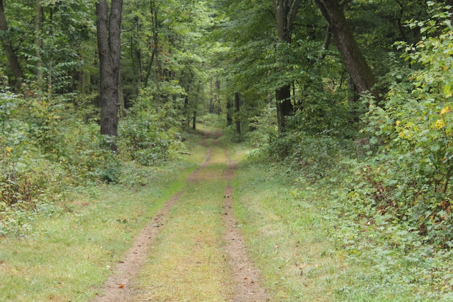 hiking path by Carlito Rivera - Landscapes Forests ( albany, green, trail, trees, hiking,  )