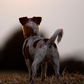 watching the sun set  by Tracy Morris - Animals - Dogs Portraits