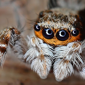 I SAW YOU by Ahmad Zaini - Animals Insects & Spiders