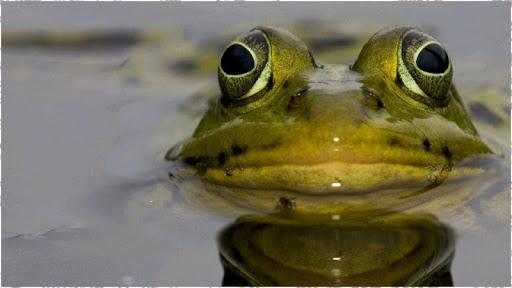 カエルの背景