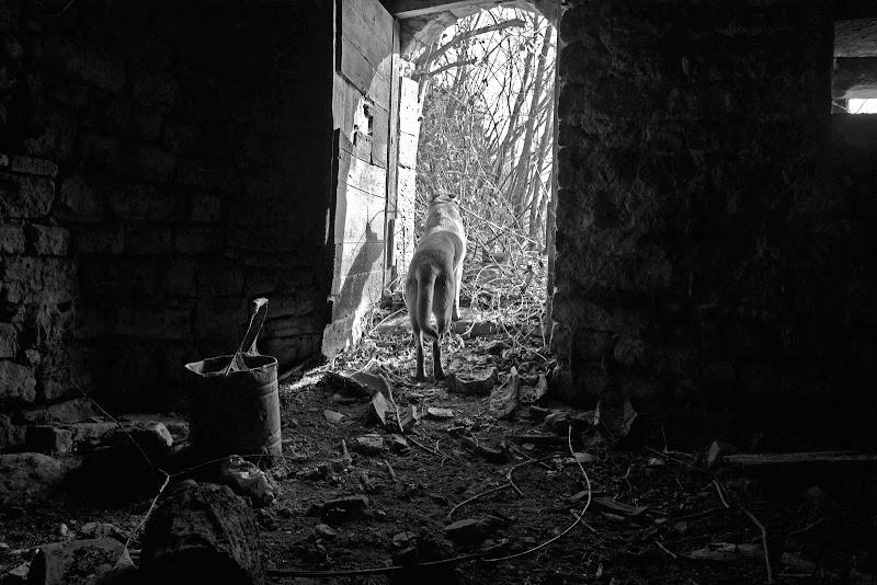 Fuori la Porta di gabriele82