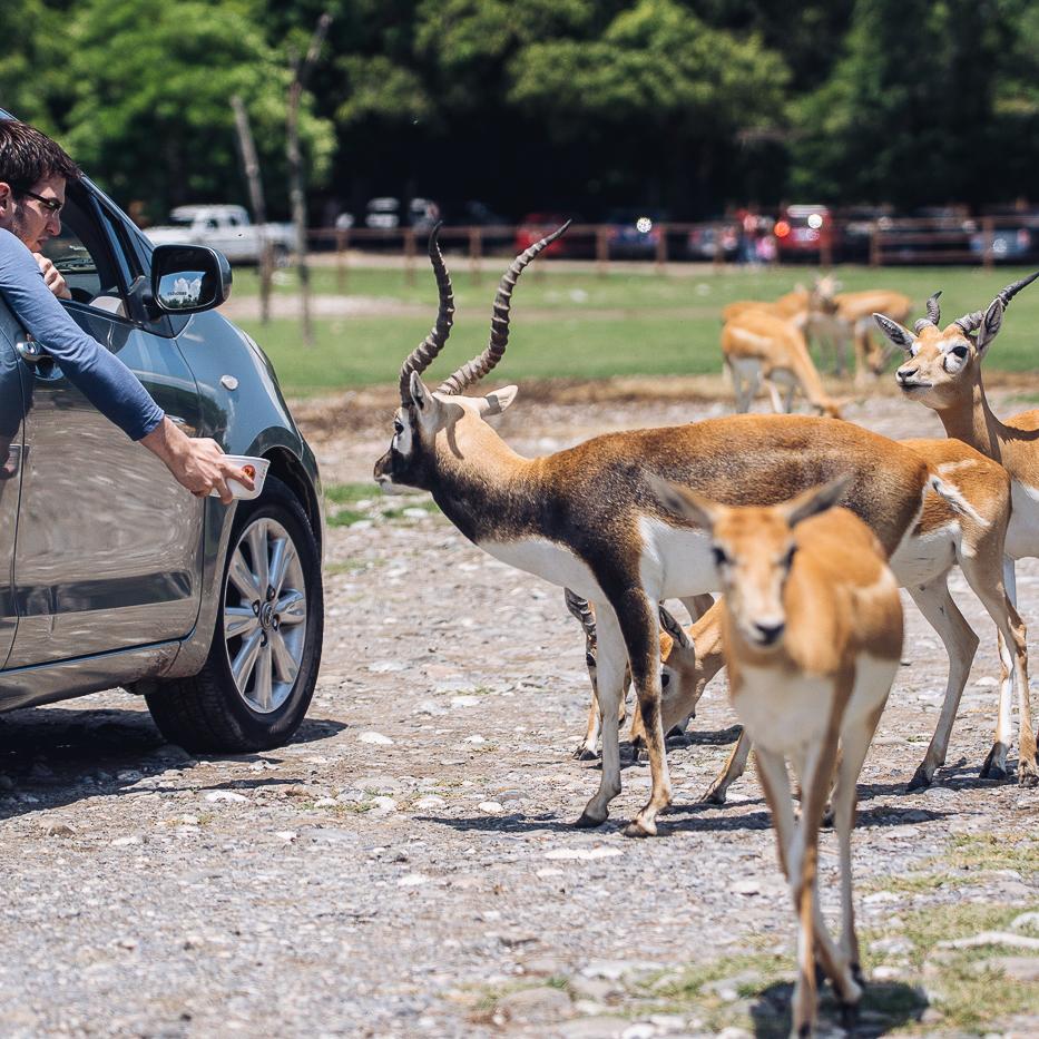 Zoofari actividades-18.jpg