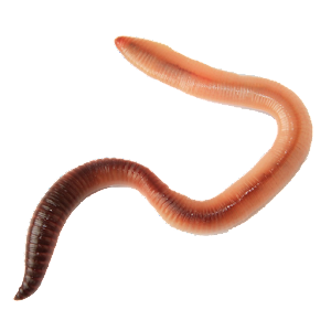 Dating apps that worm