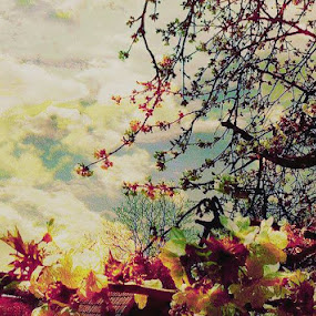 Cherry Branches with Clouds by Nat Bolfan-Stosic - Landscapes Cloud Formations ( clouds, sky, colored, charry, branches )